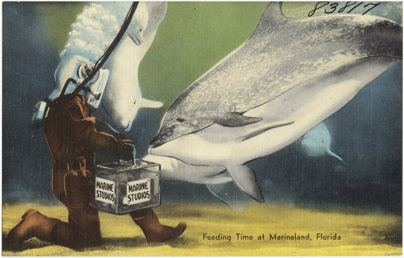 A postcard from Marineland, where Lamme worked in the '40s.