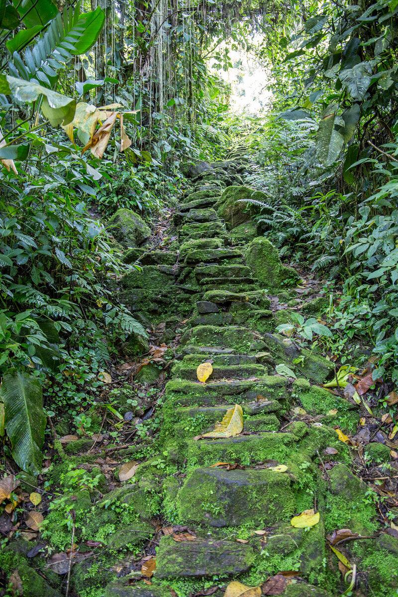 A Buritaca folyóból az elveszett városba 1200 köves járat indul.