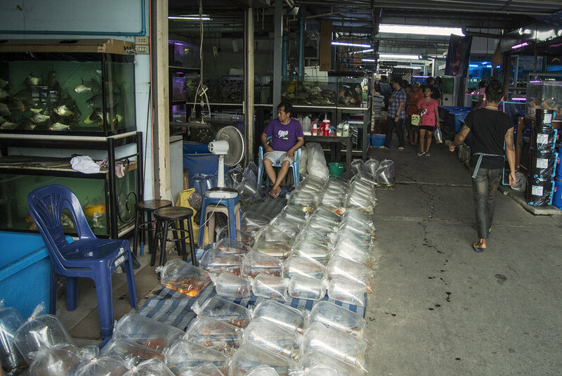 Larger sellers lay out wholesale quantities of fish in bags to await buyers.