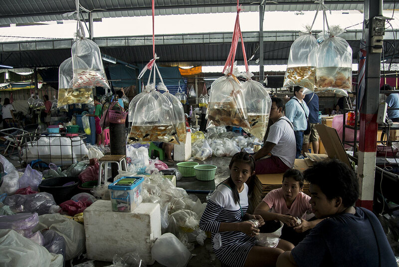 The market is a frenzy of activity on wholesale day, when buyers and sellers flock to Chatuchak from across the country.