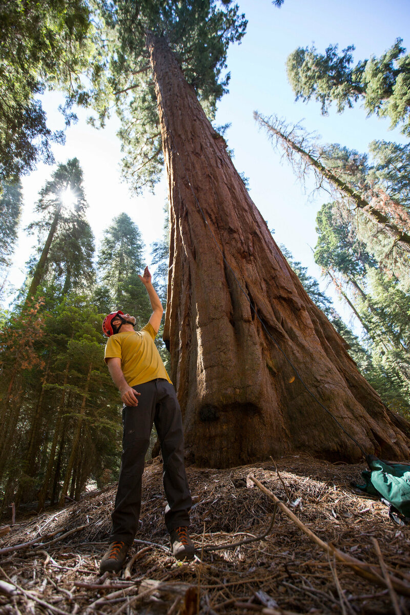 Anthony Ambrose describes the safety measures the team takes when climbing the giant sequoia trees in Sequoia National Park.