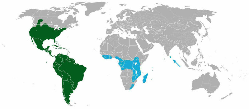 A map showing the worldwide distribution of cacti, where blue is R. baccifera, and green is everything else.