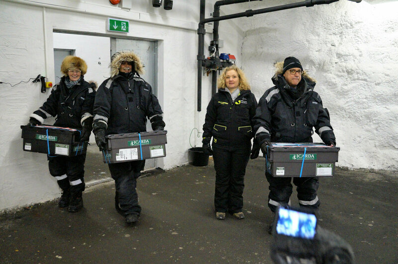 ICARDA researchers carry boxes of seeds into the icy Svalbard vault.