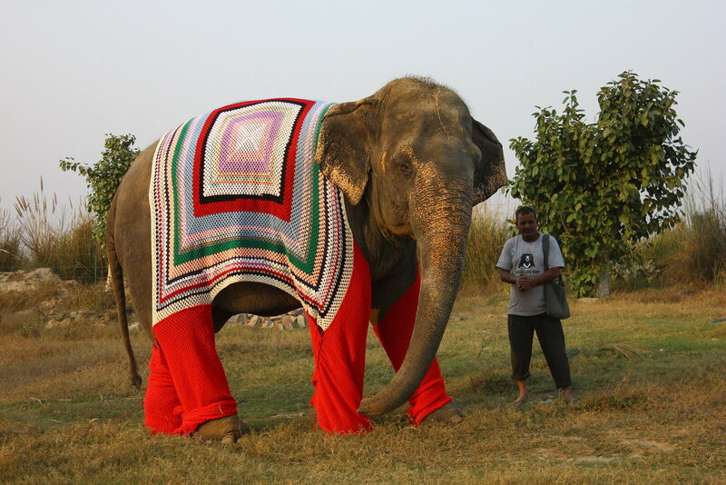 Rescued elephant Bijli out on a walk with her keeper at the Elephant Conservation & Care Center in Mathura, India.