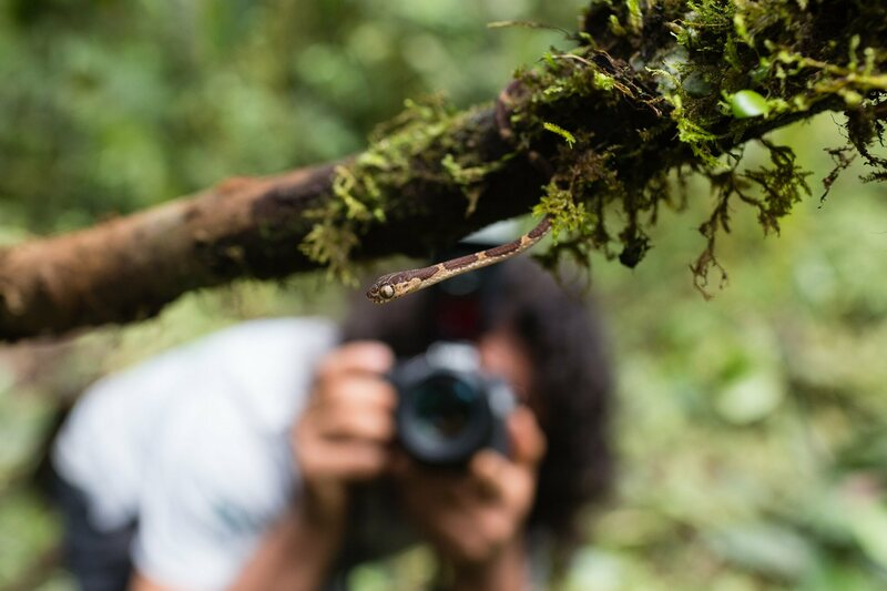 Peruvian biologist Giussepe Gagliardi and an arboreal snake during one of the daily specimen photo sessions.