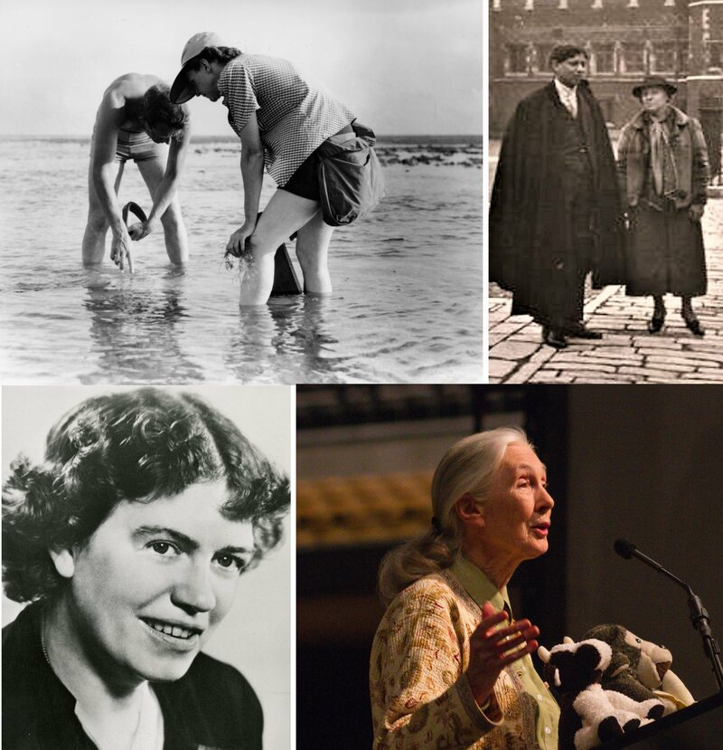 Members of the Society as it has expanded over the decades. Upper left: Rachel Carson; Upper right: Gertrude Emerson Sen; Lower left: Margaret Mead; Lower right: Jane Goodall.