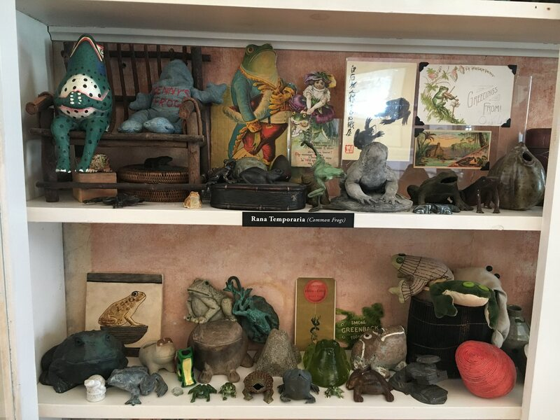 "A small section of Gorey's frog collection. The one on the left, labeled ""Kenny's Frog,"" was made by the artist for his nephew Ken Morton."