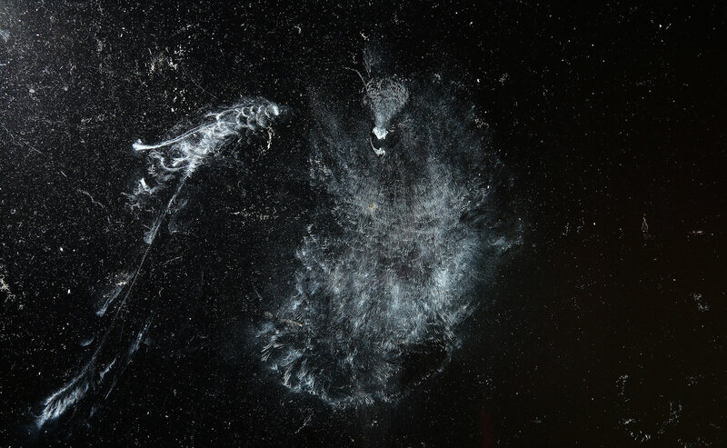 "When photographed at night, bird imprints ""take on a celestial quality, as if they were constellations in the night sky,"" says Snyder."