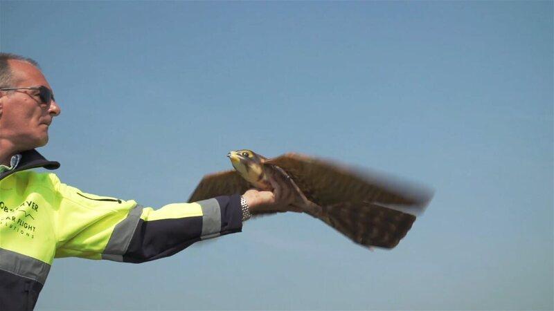 A robotic falcon prepares for takeoff.