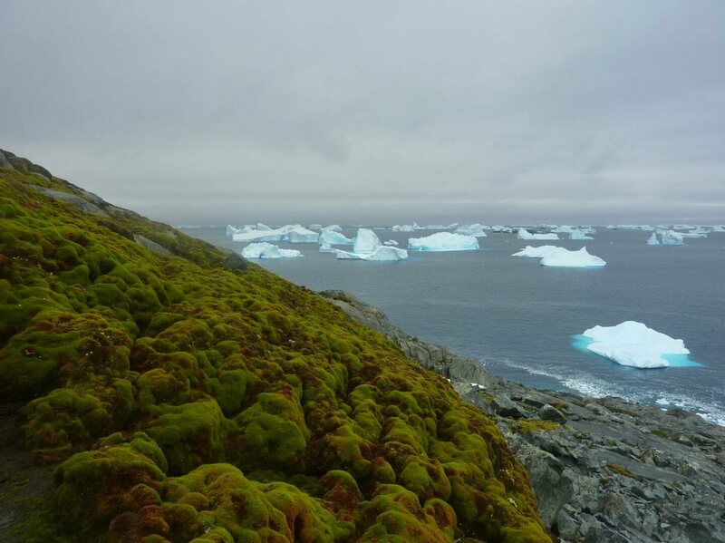 A moss bank on Antarctica's appropriately named Green Island.