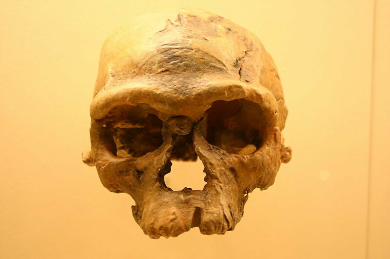 The first skull found at Jebel Irhoud, in the 1960s.