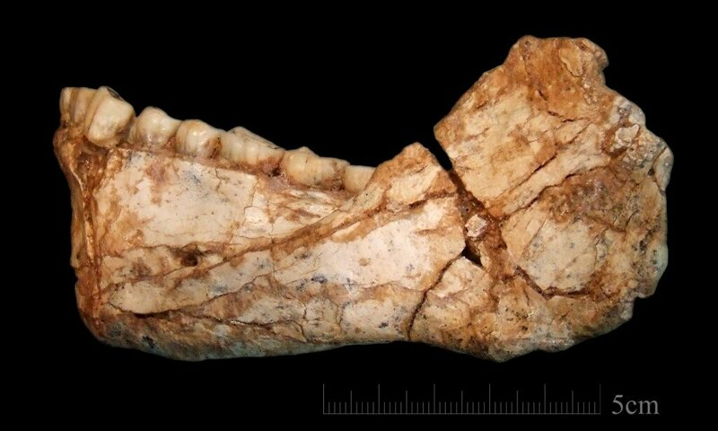 The first, almost complete, adult mandible discovered at Jebel Irhoud.