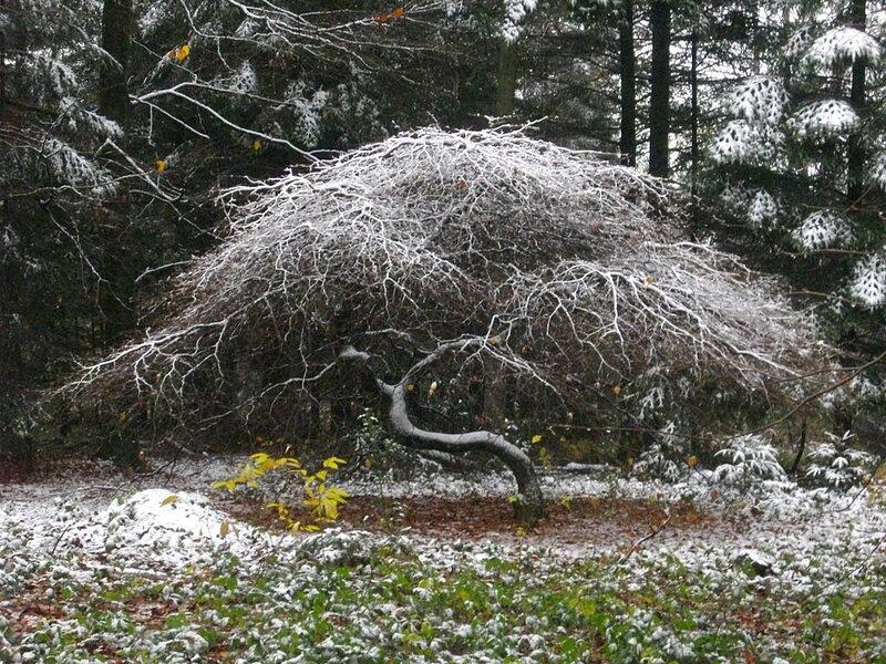 Faux de Verzy in winter.