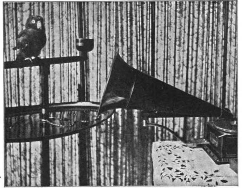 A phonograph teaches a parrot to speak. <em>The Strand Magazine</em>, 1903.