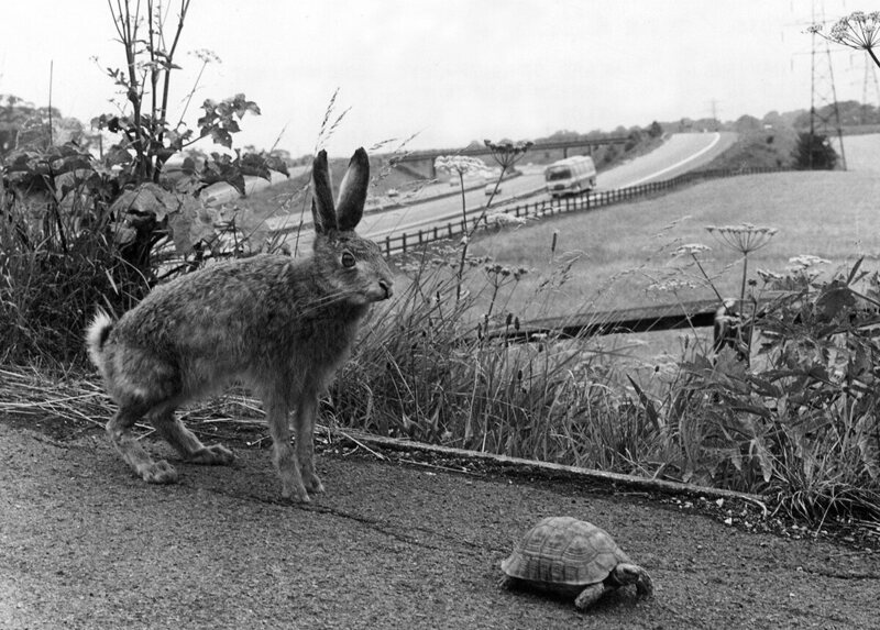 There are many different versions of <em>The Tortoise and the Hare</em>.