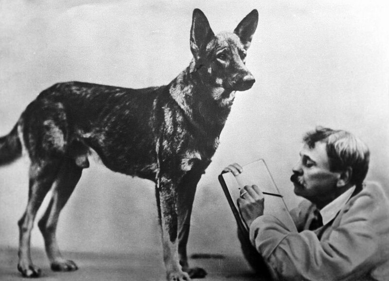 V.L. Durov and a dog, during an experiment.