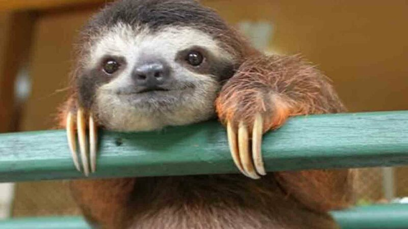 "This sloth photo is straight-up labeled ""cute sloth,"" and ... we have to agree."