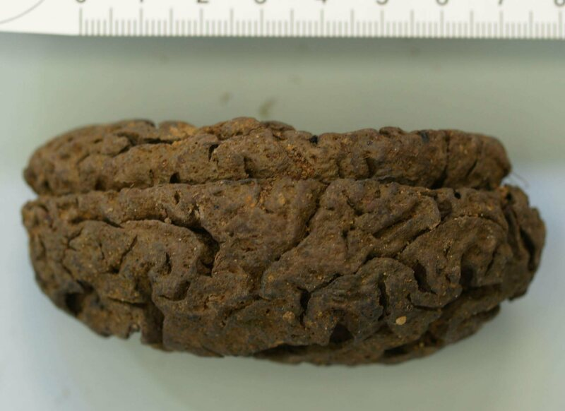 One of the preserved brains found in the grave.