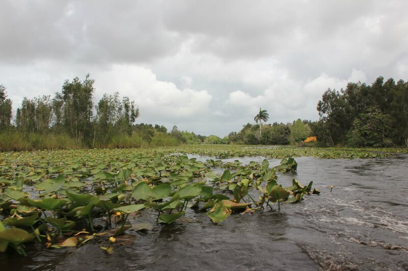Zapata Swamp, where the crocodiles were reintroduced.