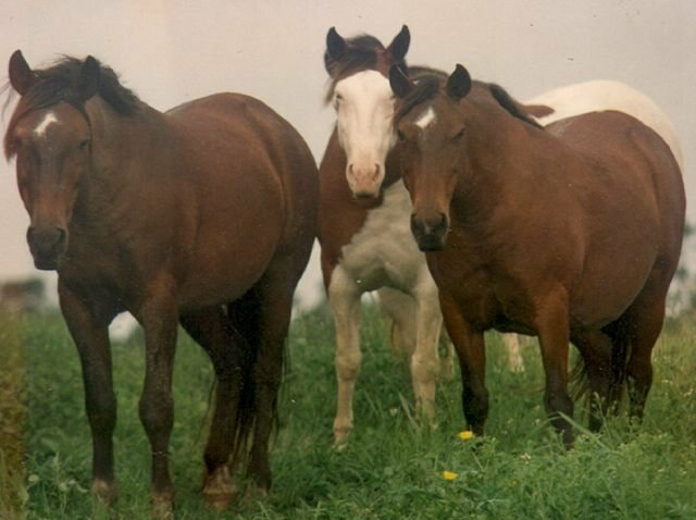 The last Abaco Barb horse on the island died in 2015.