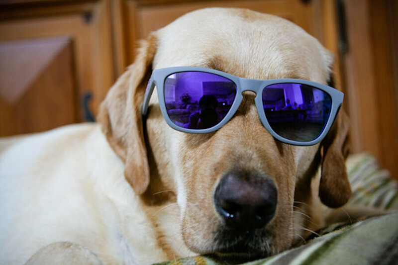 dog with glasses - 600×400