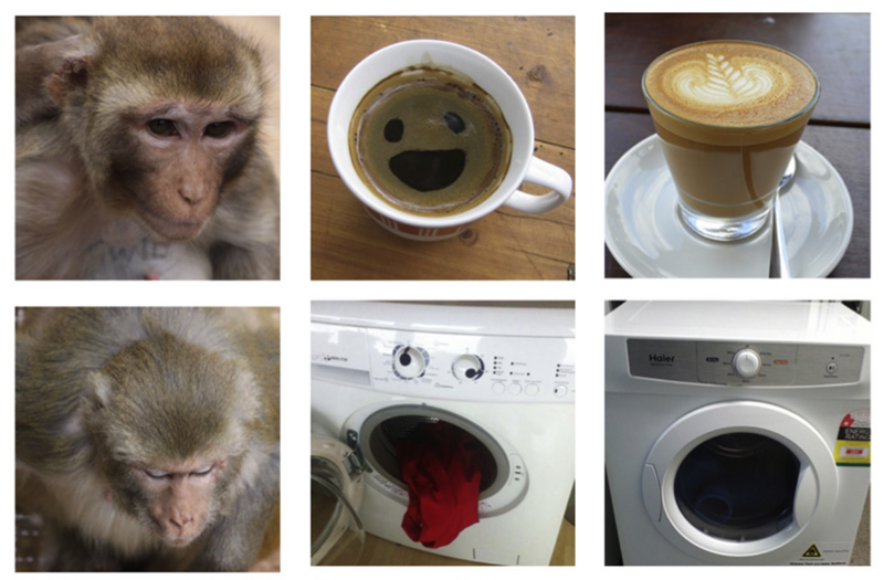 A Selection Of The Images Shown To Monkeys In Trial