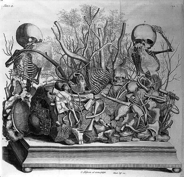 The Two Best Dutch Anatomists Of The 17th Century Hated Each Other