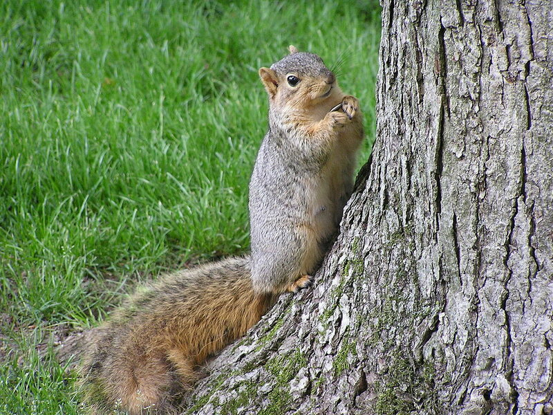 Squirrels store thousands of nuts every year. They need a system.