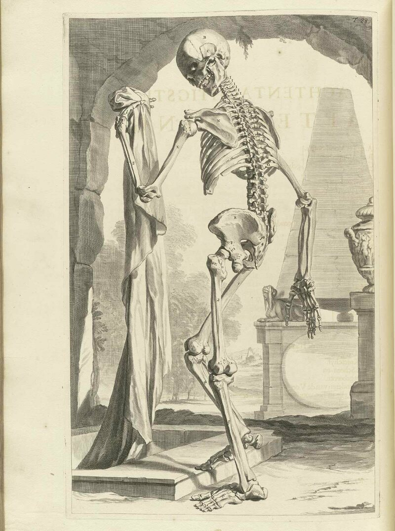 A skeleton illustration from the work of 17th-century Dutch anatomist Govert Bidloo.