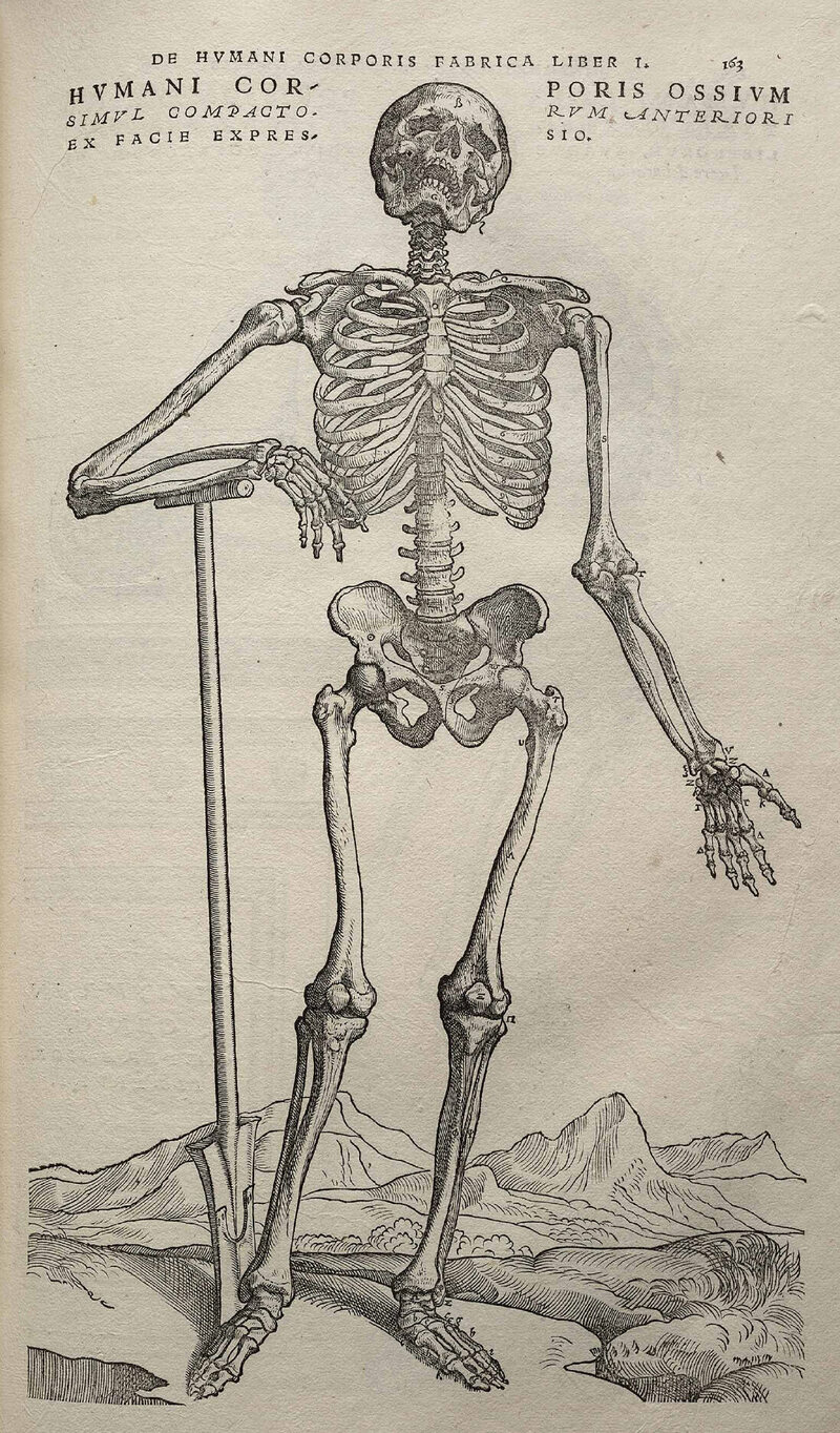 The Gruesome History of Making Human Skeletons - Atlas Obscura
