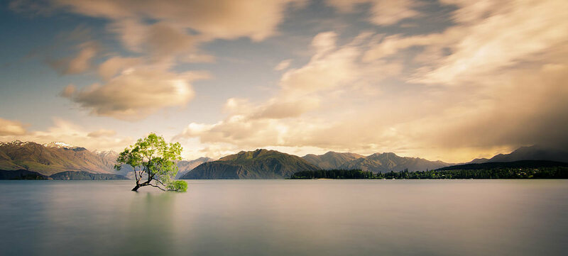 A lonely tree partially submerged in water against a backdrop of the Southern Alps.