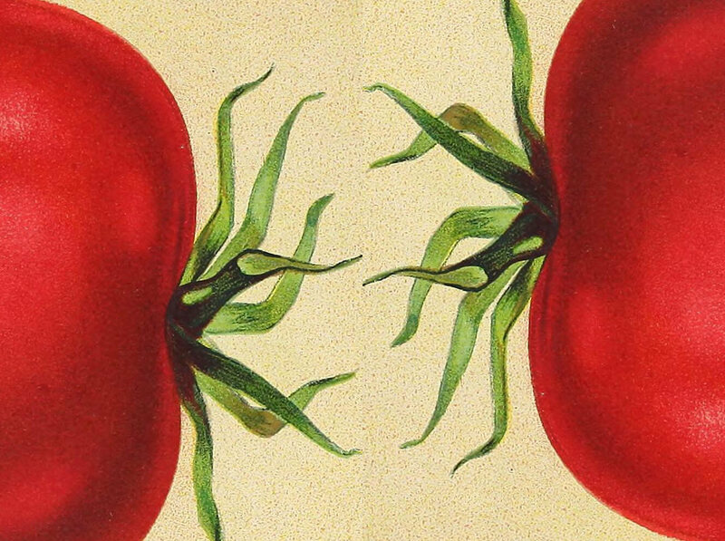 Salesmen promised that tomato pills could cure headaches, diarrhea, and cholera.