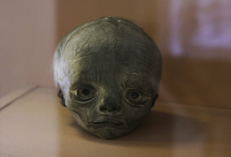 The shrunken head of a child in the Kunstkamera in St. Petersburg.