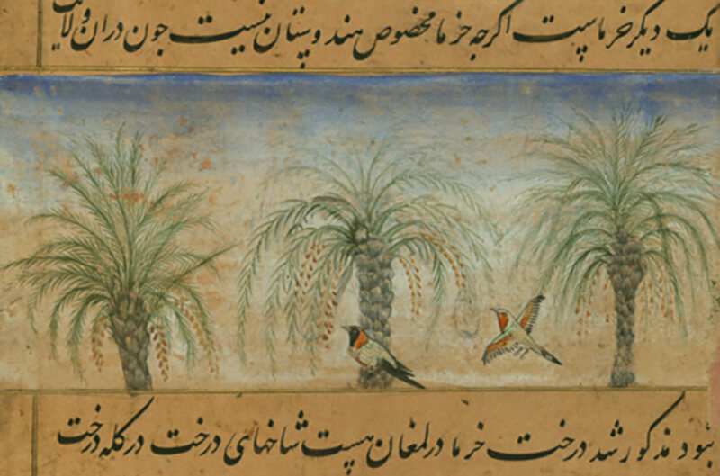 A detail of date trees illustrated in the <em>Baburnama</em>.
