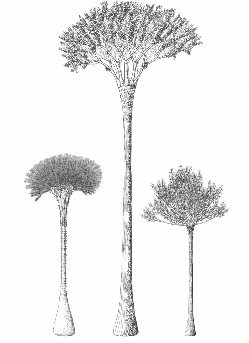 An artist's impression of cladoxlopsids.