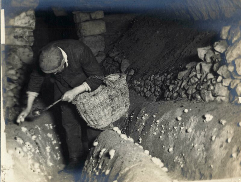 A worker with a basket and a small, hand-held light.