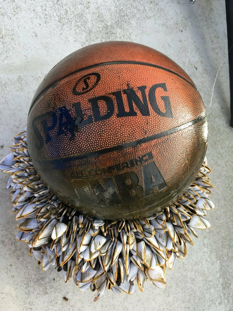 Found: A Barnacle-Covered Basketball Lost at Sea - Atlas ...