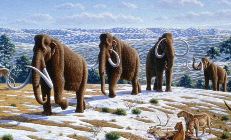 Male woolly mammoths often met disastrous ends