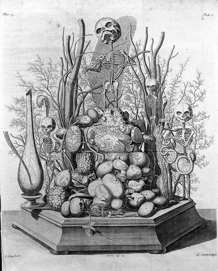 One of Frederik Ruysch's illustrations.