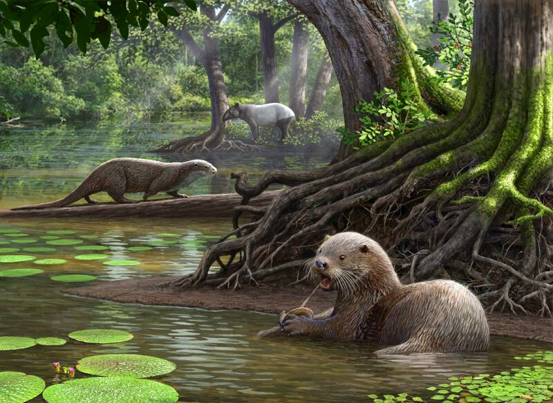 An artist's rendering of <em>Siamogale melilutra</em>, a giant prehistoric otter with a surprisingly powerful bite.