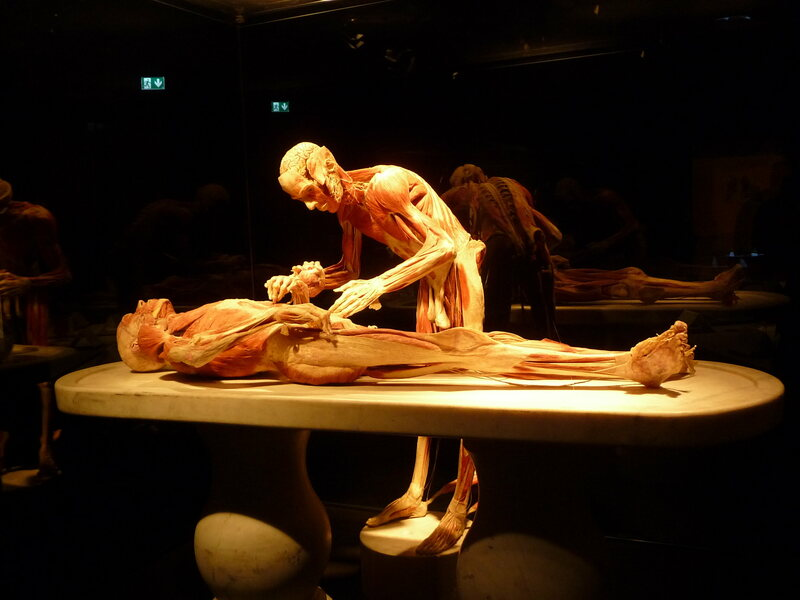 A display at the <em>Body Worlds</em> exhibition.