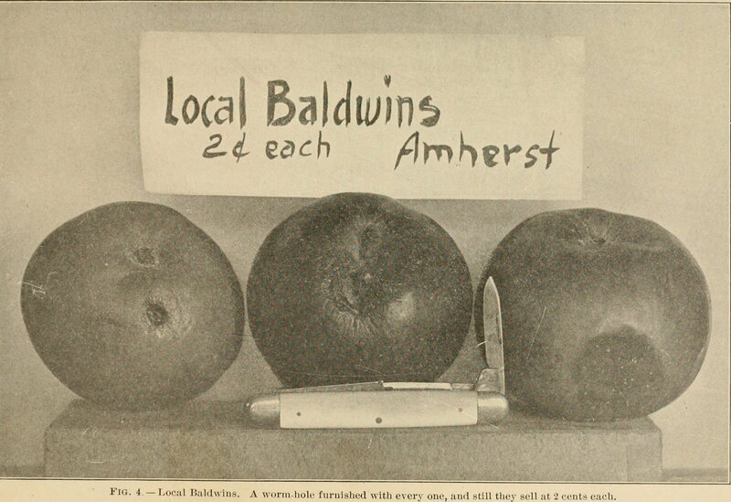 In 1913 Massachusetts, you could snag a Baldwin apple for a cool two cents.