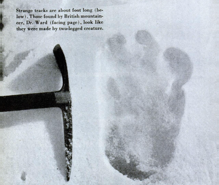 Eric Shipton's photograph of this alleged Yeti footprint ran in <em>Popular Science</em> in 1952.