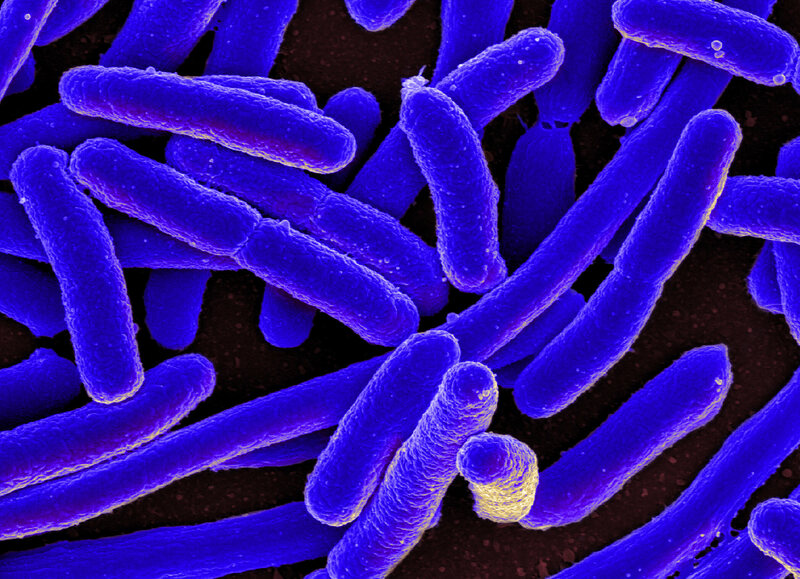 E. coli bacteria could be the key to new, unnatural drugs.