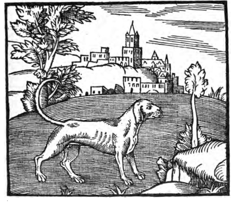 Illustration of a dog from George Turbervile's 1576 <em>Booke of Hunting</em>.