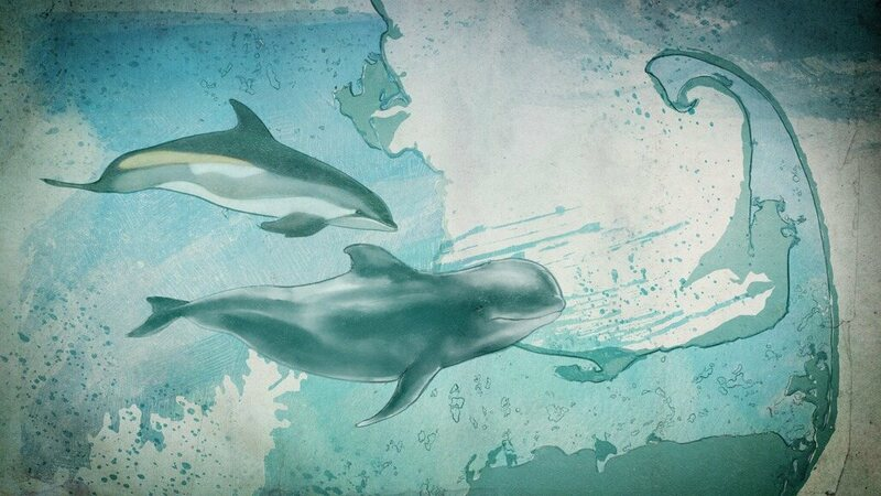 Illustration of an Atlantic White-sided Dolphin and a Long-finned Pilot Whale.