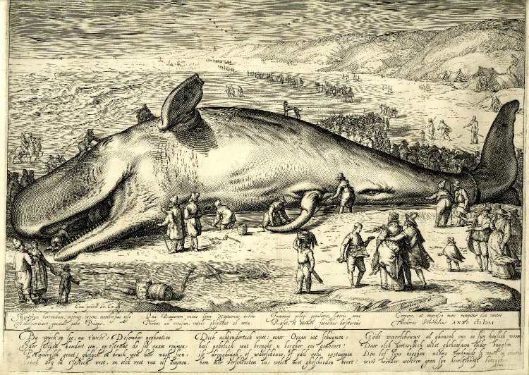 A beached whale in a 1602 illustration.
