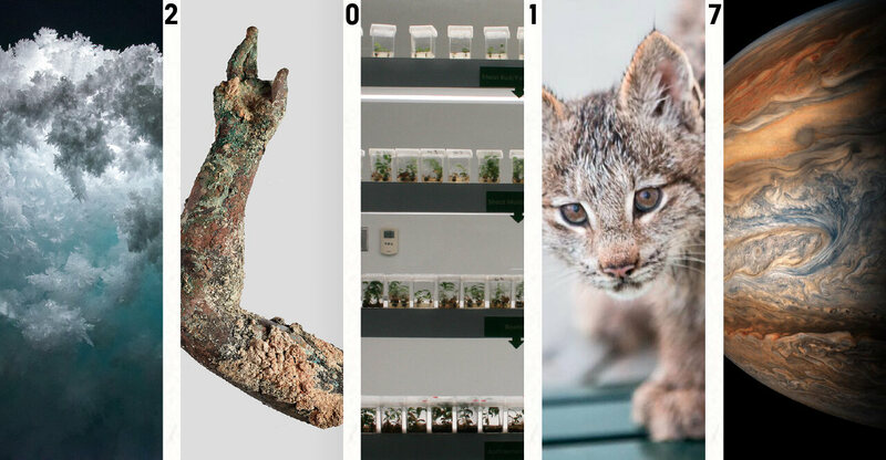 From left: Antarctica's Erebus Ice Tongue Cave; bronze arm from the Antikythera shipwreck; cloned plants at the University of Guelph; a Lynx kitten; Jupiter from <em>Juno</em>.