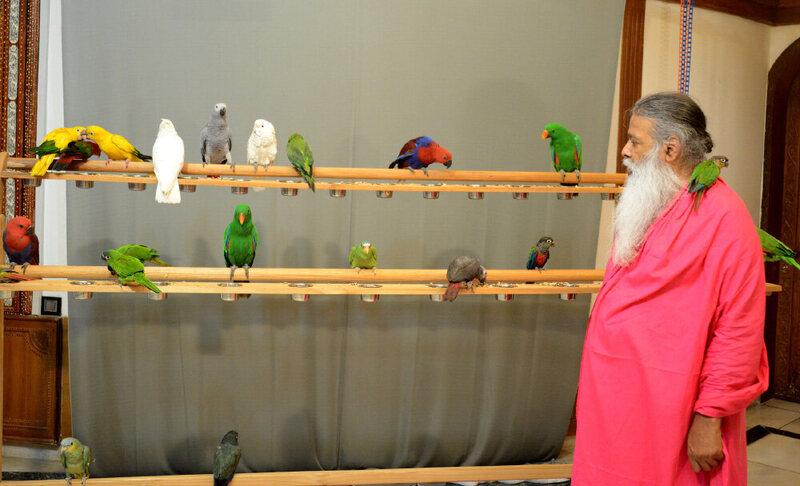Dr. Sri. Ganapathy Sachchidananda Swamiji with a variety of the birds at Shuka Vana.
