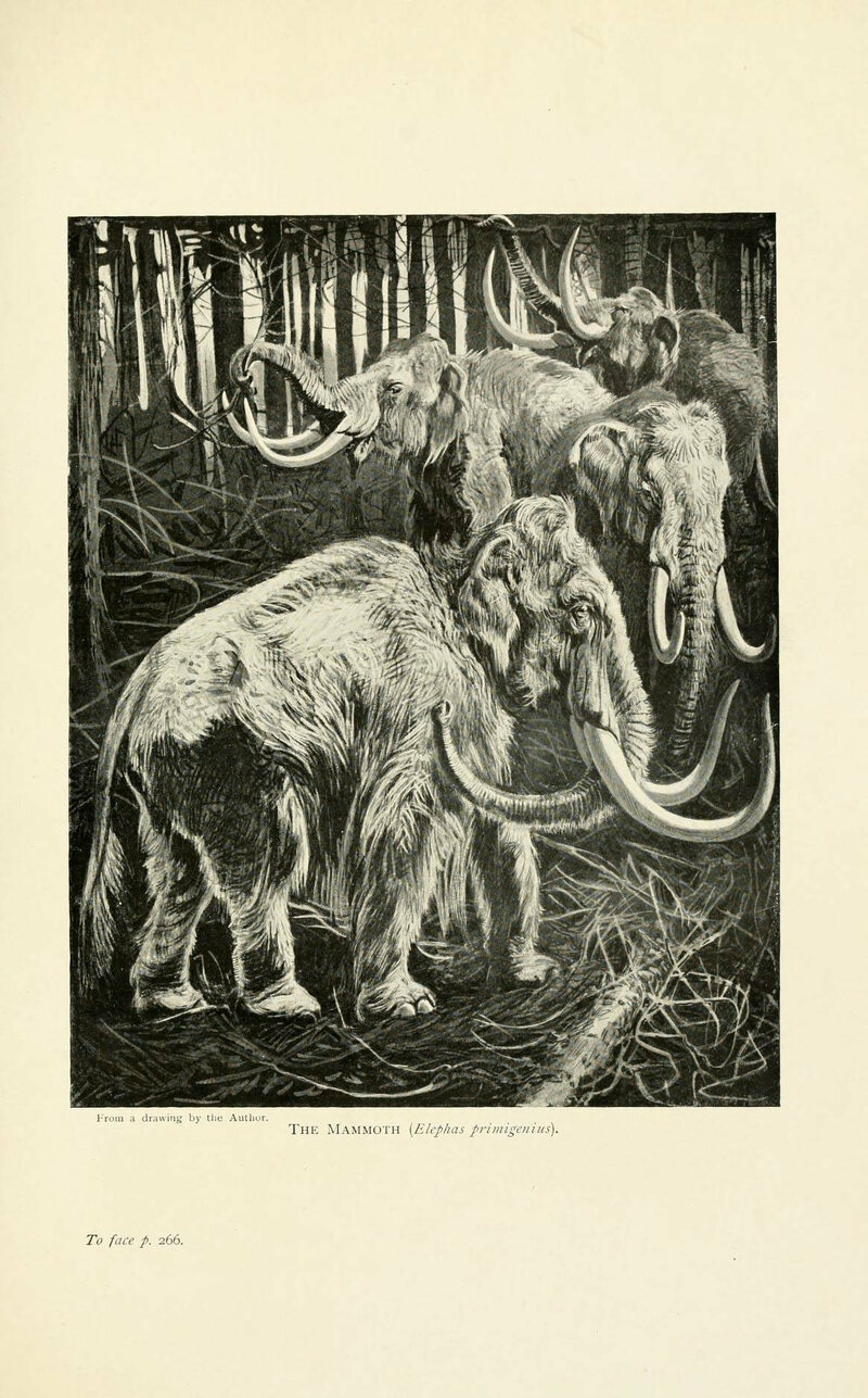 What Do You Do When You Find a Mammoth on Your Farm? - Atlas